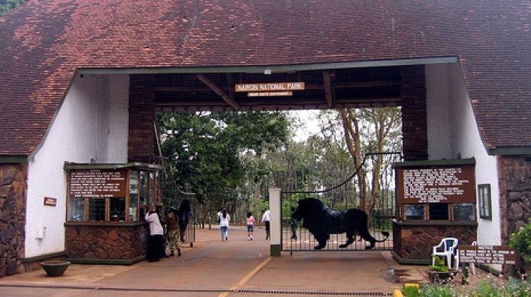 1 Day Trip in Nairobi National Park