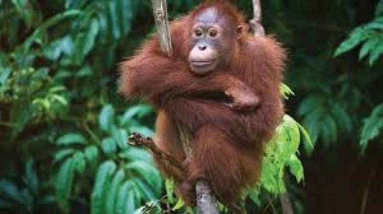 10-day Borneo Discovery  Tour