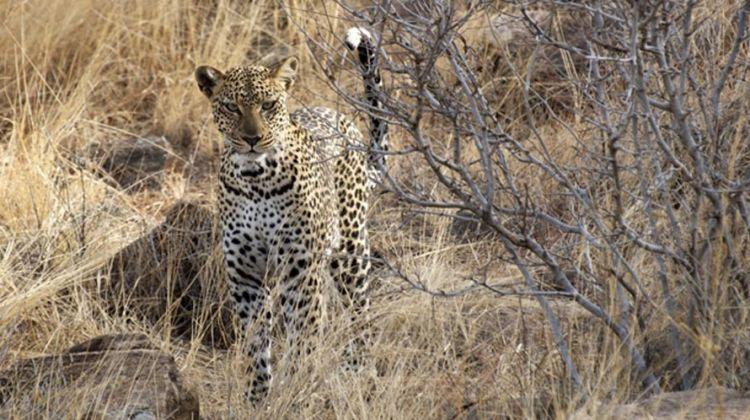 10-day Samburu 5 and African Big 5 in One Epic Safari
