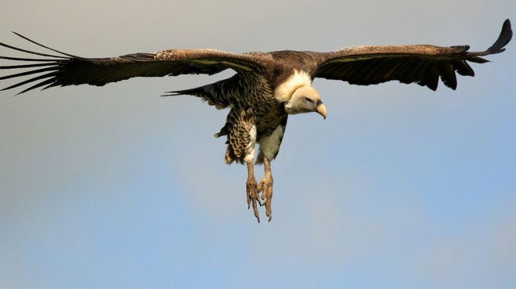 10 Days-Bird Watching & Wildlife Safari