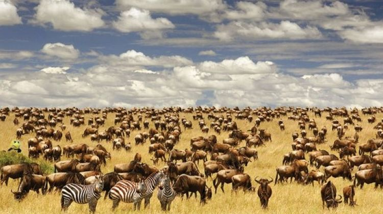 10-Days Special Serengeti Migration Safari