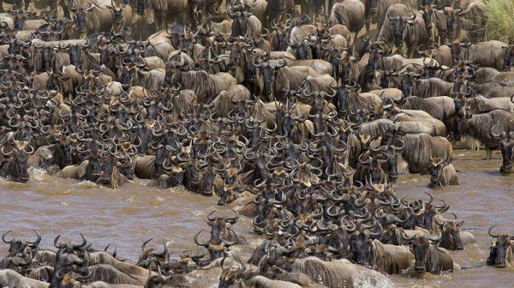 10 DaysTanzania Wildebeest Migration June-Nov