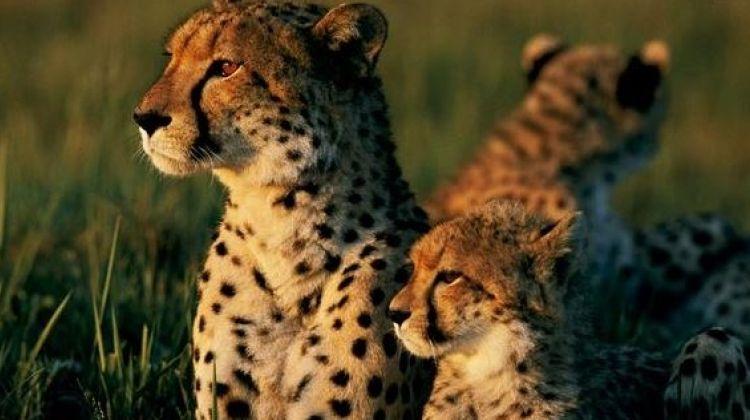 11-Day Honeymoon Trip in Tanzania