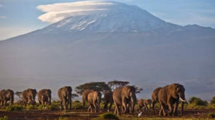 11-Day Honeymoon Trip in Tanzania