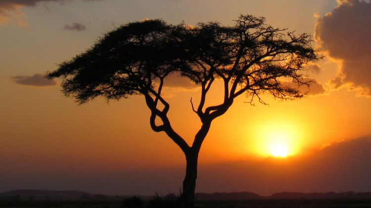 12-Days Best of Kenya Wildlife Safari