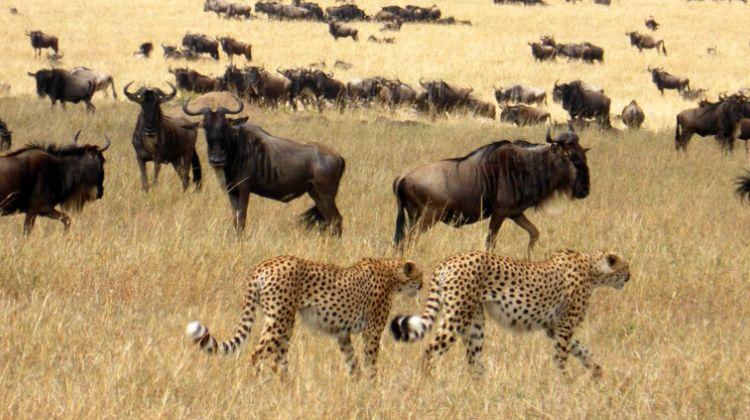 12-Days Best of Kenya Wildlife Safari