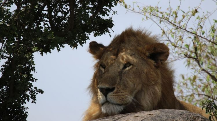 14-Day East Africa Honeymoon Safari