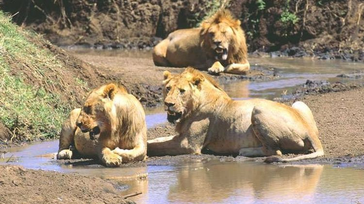 14 Day Family Safari in Tanzania  (3 pax)