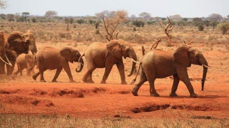 14 Day Legendary Expedition Safari
