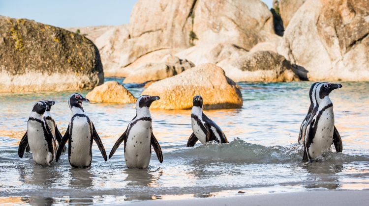 15 Day Cape Town, Garden Route & Kruger Park Tour