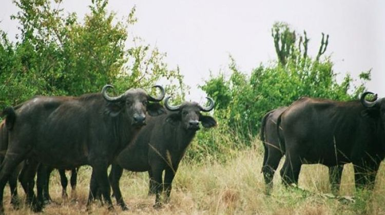 15-Day East Africa Expeditions