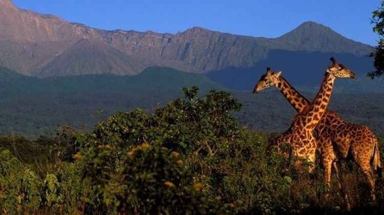 15-Day Family Tour Extravaganza to Tanzania