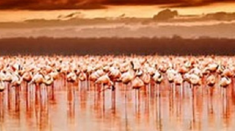 16-Day Kenya Adventure & Beach Holiday