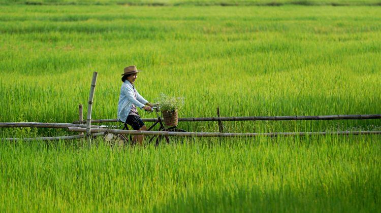2-Day Mekong Delta Tour