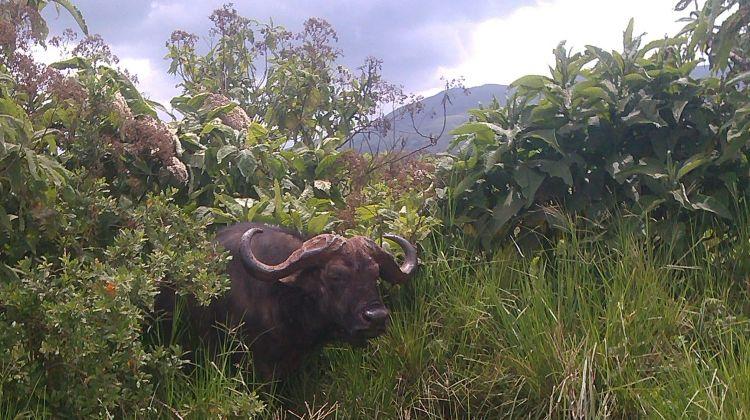 2-Day Ngorongoro Crater & Lake Manyara Safari