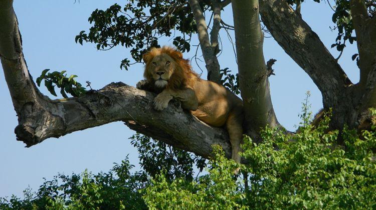 2 Day Tour of Queen Elizabeth National Park