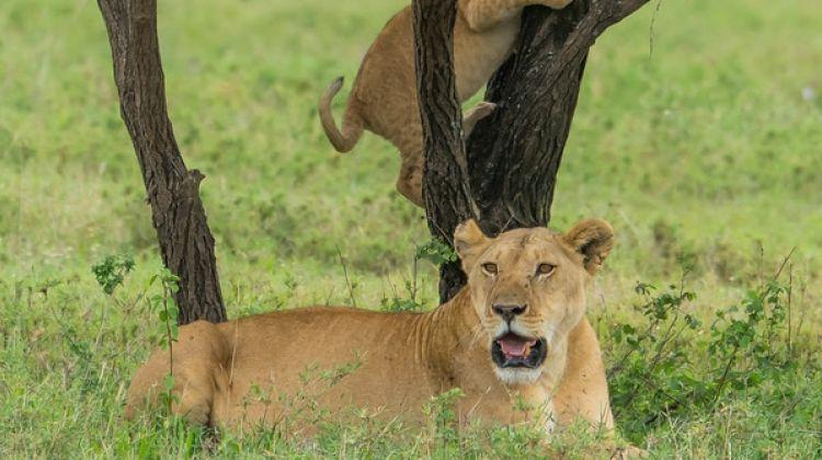 2-Day Weekend Safari