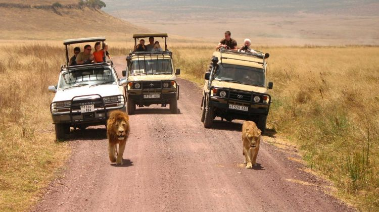 2 Days Safari - Manyara and Ngorongoro