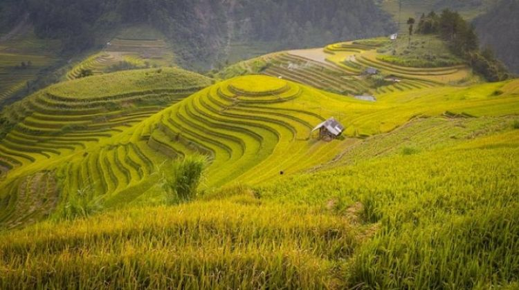 3-day Adventure To Mu Cang Chai Rice Fields