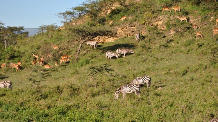 3-Day Maasai Mara Camping Safari Adventure