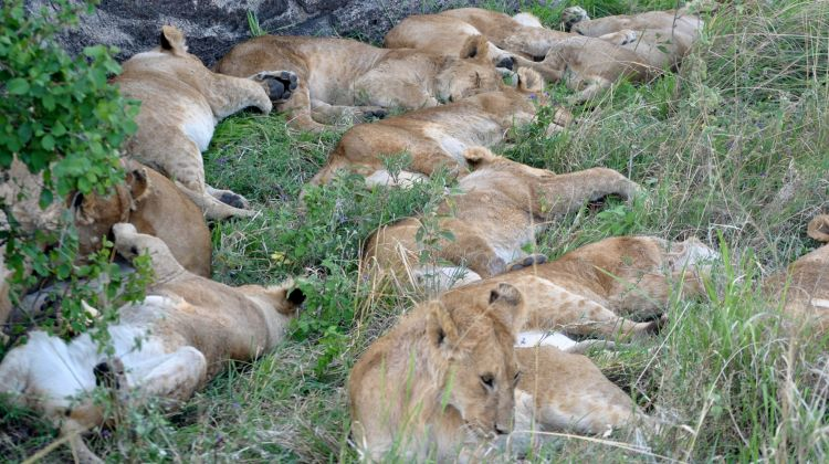 3-Day Maasai Mara Camping Safari Adventure