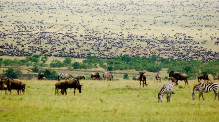 3-day Maasai Mara Camping Safari
