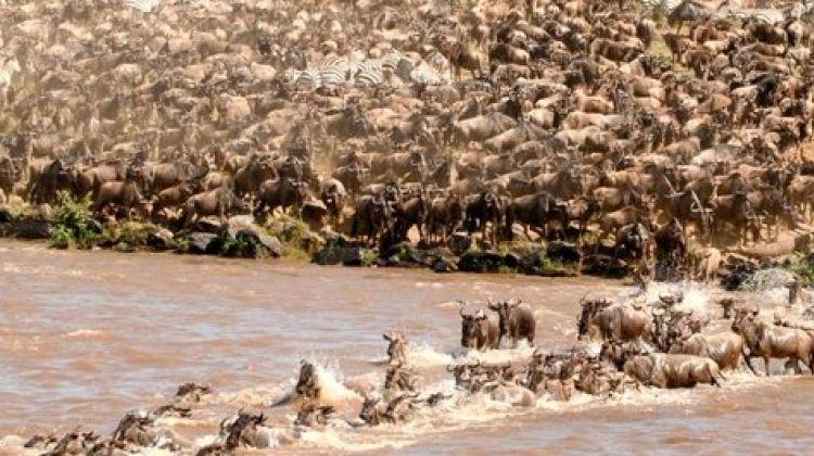 3-Day Maasai Mara Joining Group Budget Camping Safari