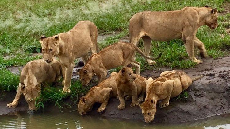 3-day maasai mara safari
