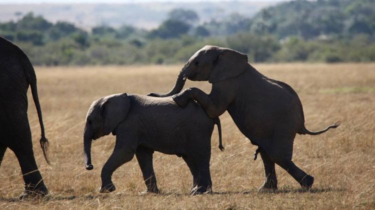 3-Day Ol Pejeta Conservancy Luxury Safari at Sweetwaters