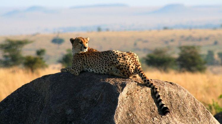 3 Day Safari in Mikumi National Park