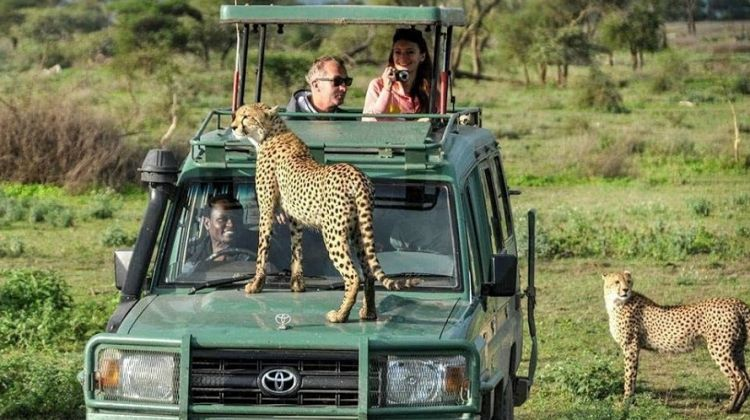 3 Day Safari in Mikumi National Park