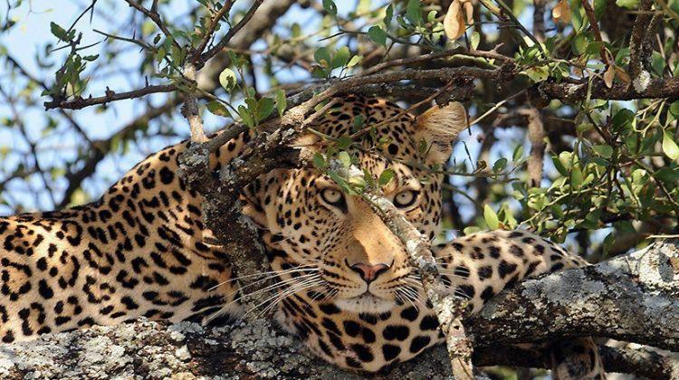 3 Day Safari in Selous Game Reserve