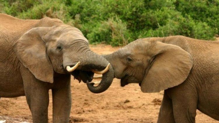 3 Day Tanzania Safari Tarangire, Lake Manyara, Ngorongoro