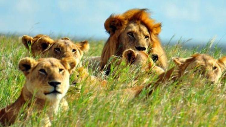 3-Day Tanzania Safari