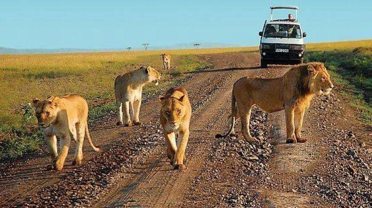 3-Day Trip To Murchison Falls