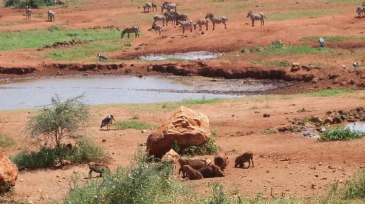 3-Day Tsavo Safari