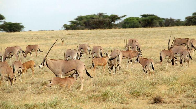 3 Days 2 nights Masai Mara Budget Safari