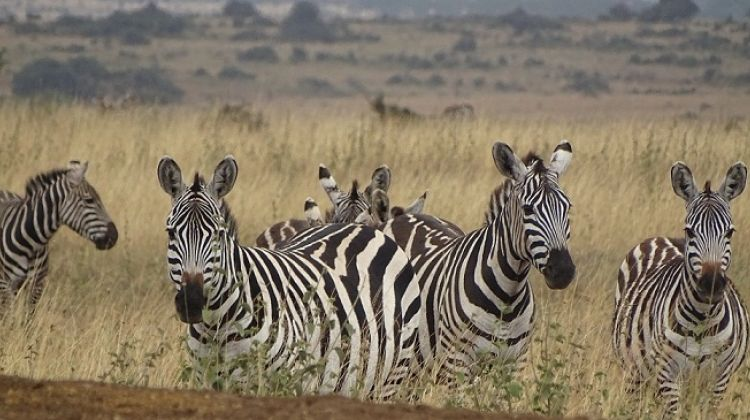3 Days 2 Nights Samburu National Reserve Safari in Kenya