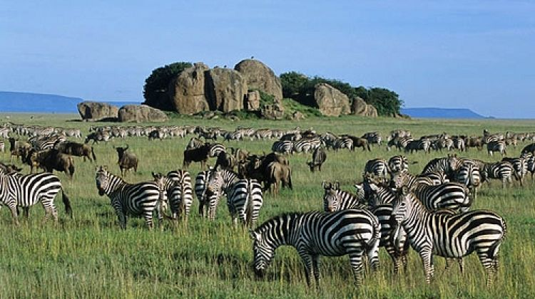 3 Days African Safari