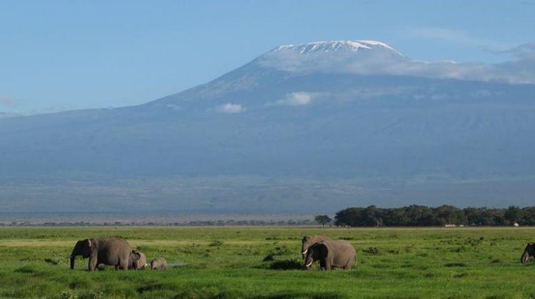 3 Days Amboseli Safari (Kili Base Tour)