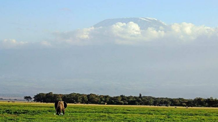 3 Days Amboseli Safari (Kili Base Tour)