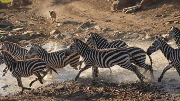 3 Days Camping Safari