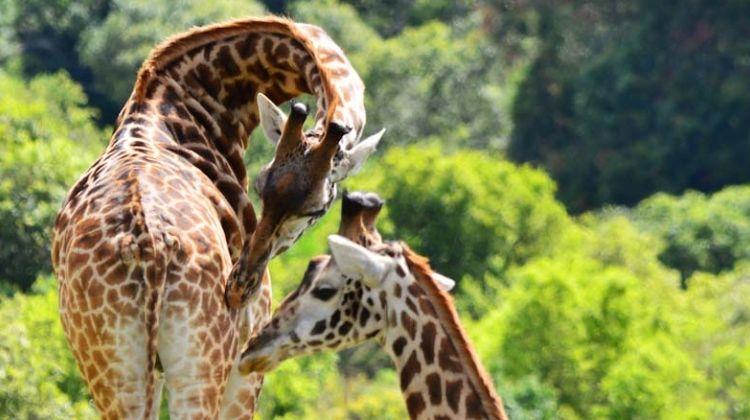 3-days Escape to Selous Game Reserve - Safari