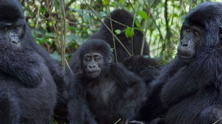 3 Days Gorilla Trekking Tour to Bwindi