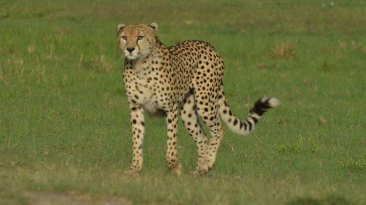3 Days Maasai Mara Migration Safari