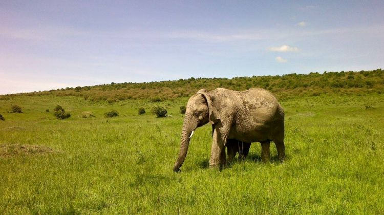 3 Days Maasai Mara Safari Tour