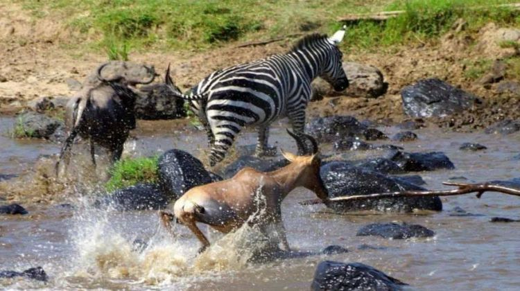 3 Days Maasai Mara Safari Trip