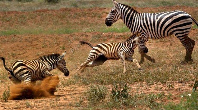 3 Days Maasai Mara Safari Trip