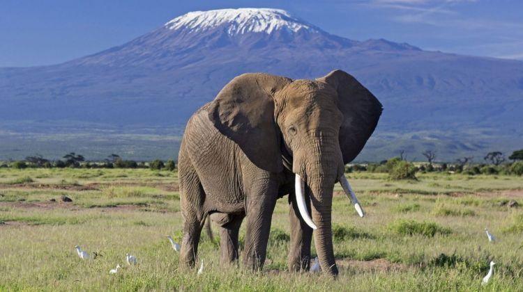 3 Days' Safari at Amboseli National Park