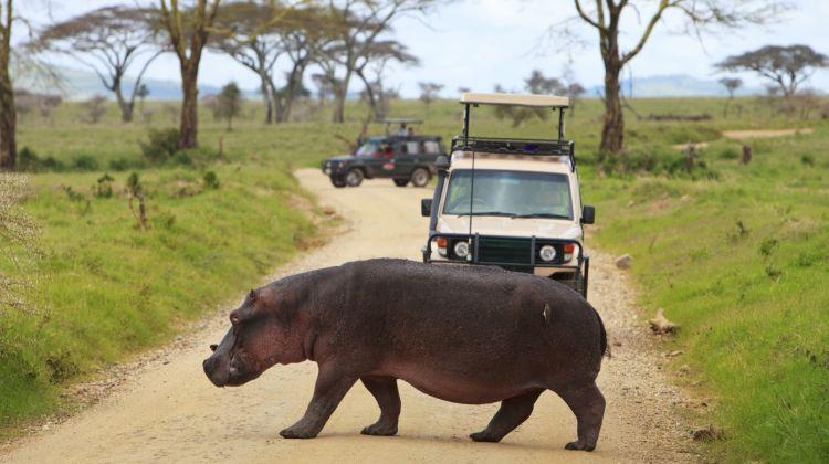 3 Days Safari - Manyara, Ngorongoro and Tarangire